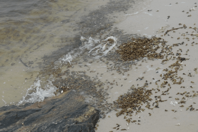 Nigeria Coastal Intertidal Organisms